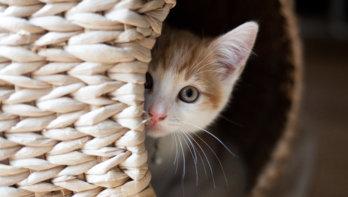 Is jouw kat gestrest?