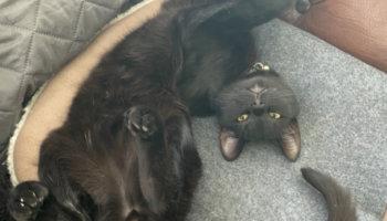 kat verhuisdier asiel