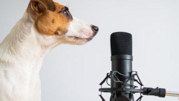 Stem gebruiken bij de opvoeding van honden