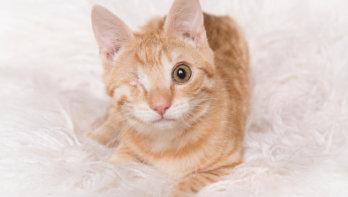 Kat met een handicap adopteren