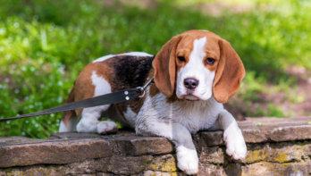 Suikervrije ontbijtkoek gevaarlijk voor hond