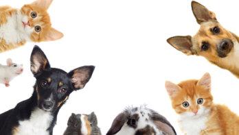 Quiz: Welk huisdier past bij mij?