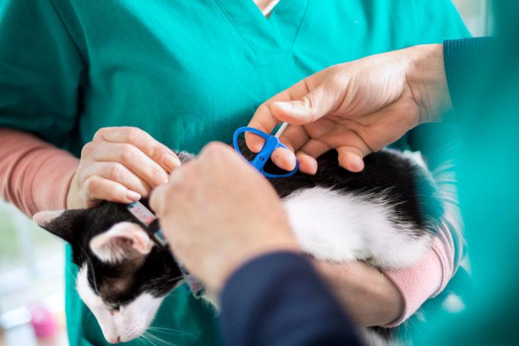 chip zetten kat registratie