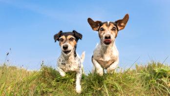 Hoeveel actie heeft je hond nodig?