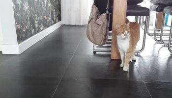 Kat toef verhuisdier asiel nieuw thuis