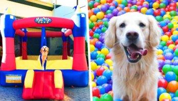 Hond krijgt ultieme verjaardagscadeau