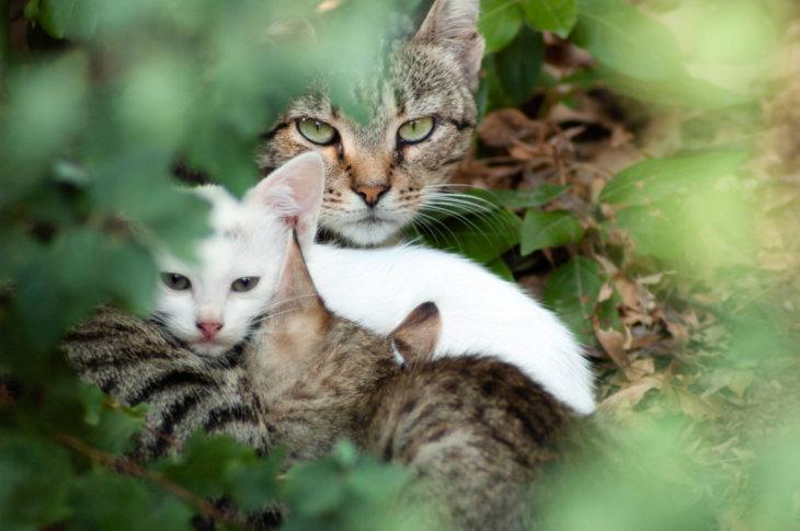 socialisatie kat door moederpoes