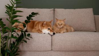 Meeroken ongezond voor je hond of kat