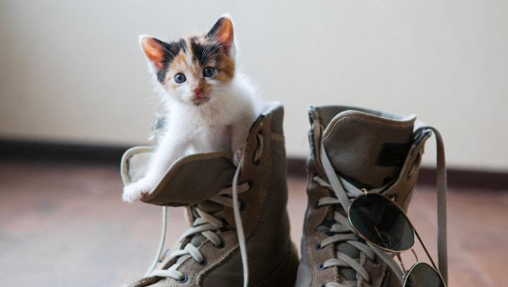 Socialisatie van je kat