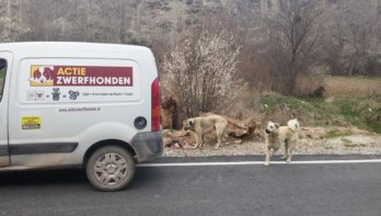 Online kunstveiling Stichting ActieZwerfhonden