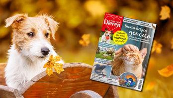 Hart voor Dieren magazine 11.2021