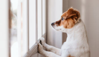 campagne zorg voor je dier