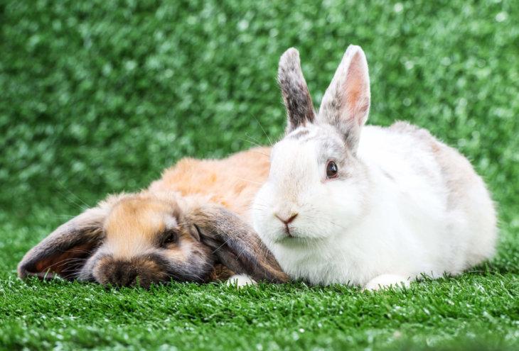 oude konijnen ouderdomskwaaltjes