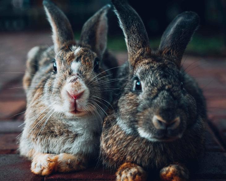 verzorgen oude konijnen senior