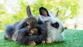 oude konijnen verzorging