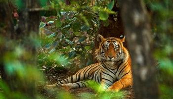 toerisme reis wilde dieren